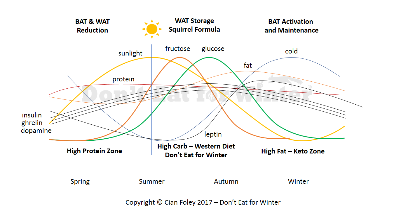 BAT Fat Natural Annual Cycle - Don't Eat for Winter